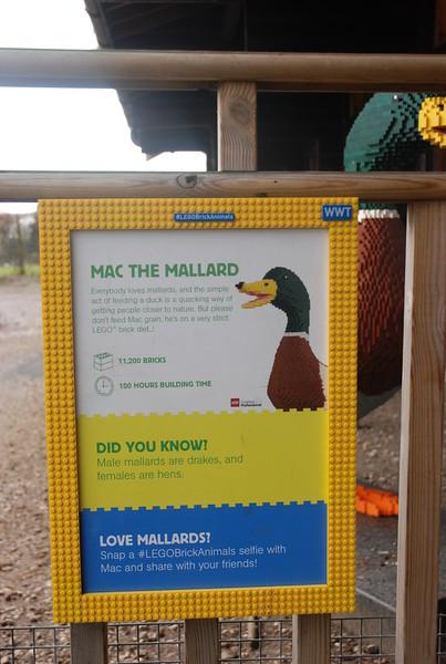 Mac the Mallard