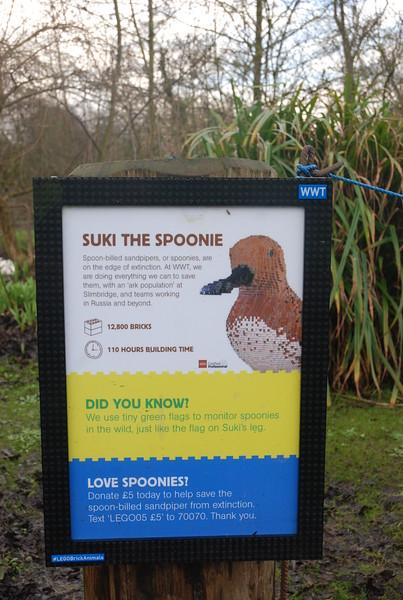 Suki the Spoonie