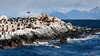 Sea Lions and Cormorants, Beagle Canal, Tierra del Fuego, Patagonia