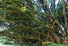 Rain forest on Green mountain