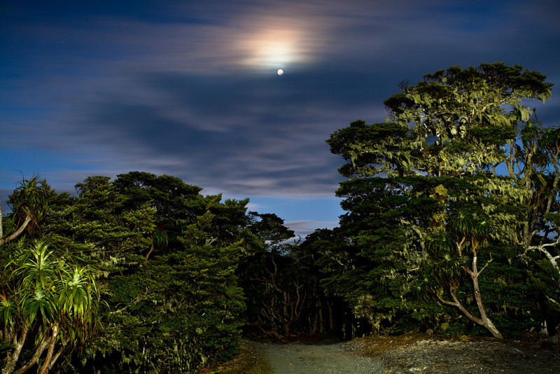 Monn and beach forest, Mt Arthur , Kahurangi National Park
