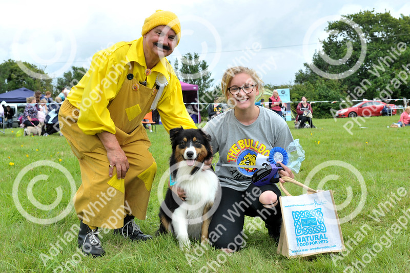 Llys Nini Annual Summer Dog Show in Penllergaer, Swansea ... Owner Cassie Brennan with 'Rue' an Australian Shepherd winner of the Miss World competition pictured with Denny Twp.