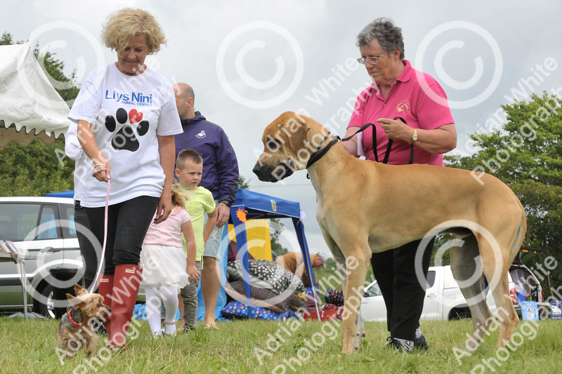 Llys Nini Annual Summer Dog Show in Penllergaer, Swansea ... Debbie Davies (left) and Sue Wallace from the RSPCA Llys Nini.