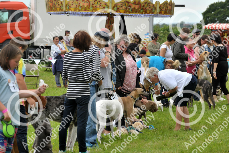 Llys Nini Annual Summer Dog Show in Penllergaer, Swansea ... judging of the Mr Universe competition.