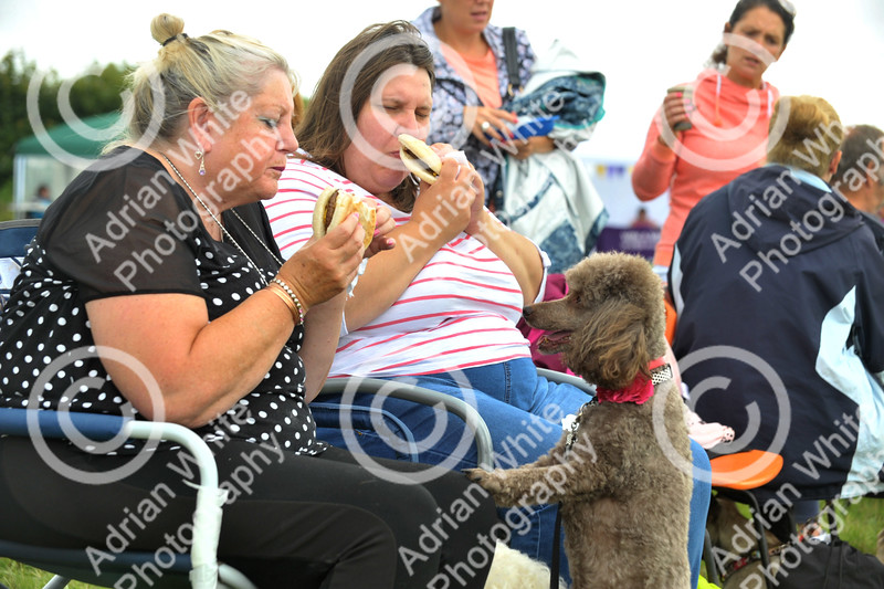 Llys Nini Annual Summer Dog Show in Penllergaer, Swansea ... Sheridan Voyzey and daughter Lana with their rescue dog 'Truffles'.