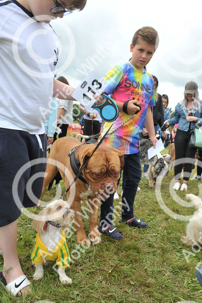 Llys Nini Annual Summer Dog Show in Penllergaer, Swansea ... 'Ozzie' and Rhys Thompson