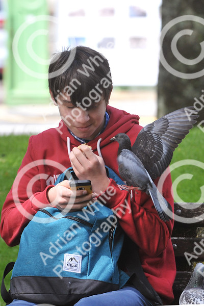 CAPTION ONLY... Catch the Pigeon Mobbed by Pigeons, Kit Arnold (age 15) attempts to eat his sandwich in the sunshine of the Sunken Gardens, Llanelli. ((((contact details available))))