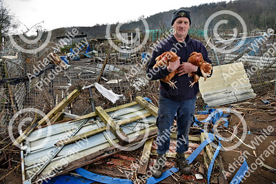 Allotmenteers in Pontypridd begin the clean up of their growing space following the wreckage to the Tin Plate Allotments by the burst banks of the River Taff brought by the rain and floods of Storm Dennis.  Tin Plate Allotmenteer Timothy Benjamin standing on the remains of his chicken coup holding two of his surviving chickens. He has plots on the allotments and lost 63 chickens to Storm Denis.   Copyright © 2020 by Adrian White  Photography, all rights reserved. For permission to publish - contact me via www.adrianwhitephotography.co.uk Please respect copyright laws.