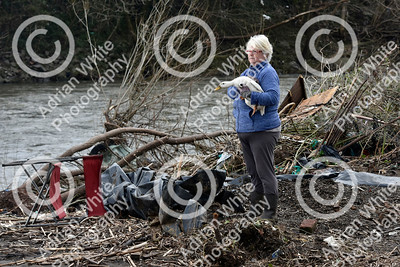 Allotmenteers in Pontypridd begin the clean up of their growing space following the wreckage to the Tin Plate Allotments by the burst banks of the River Taff brought by the rain and floods of Storm Dennis.  Tin Plate Allotment treasurer Julie Bliszko on the remains of her allotment with one of her surviving ducks.  Copyright © 2020 by Adrian White  Photography, all rights reserved. For permission to publish - contact me via www.adrianwhitephotography.co.uk Please respect copyright laws.