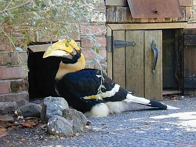 Big beak
