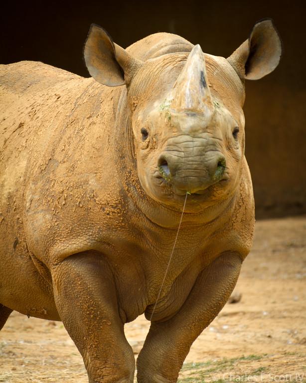 IMAGE: http://www.cscott4.com/Zoos/2011-Caldwell-Zoo-Tyler-Texas/i-PCtbGGW/3/XL/201105081312-XL.jpg
