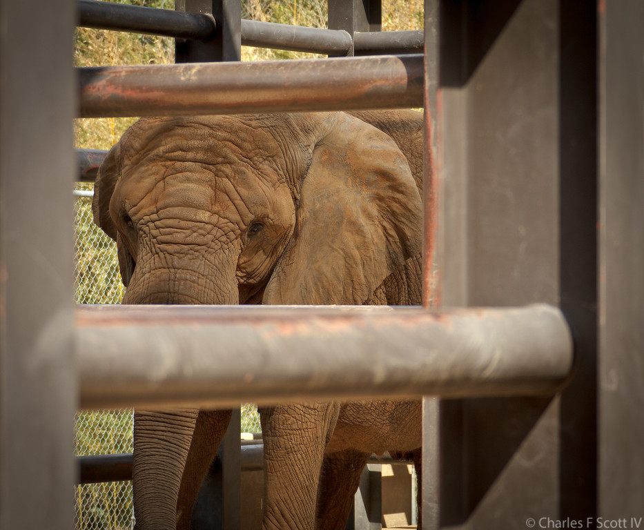 IMAGE: http://www.cscott4.com/Zoos/2011-Caldwell-Zoo-Tyler-Texas/i-mrnbJZc/3/XL/201110083491-XL.jpg