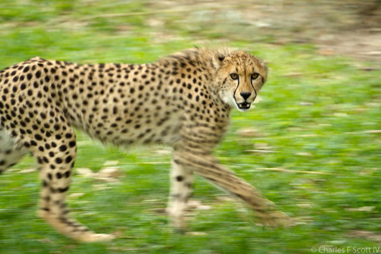 IMAGE: https://photos.smugmug.com/Public/2011-Caldwell-Zoo-Tyler-Texas/i-x6md4rB/4/X2/2011_05_08_1332-X2.jpg