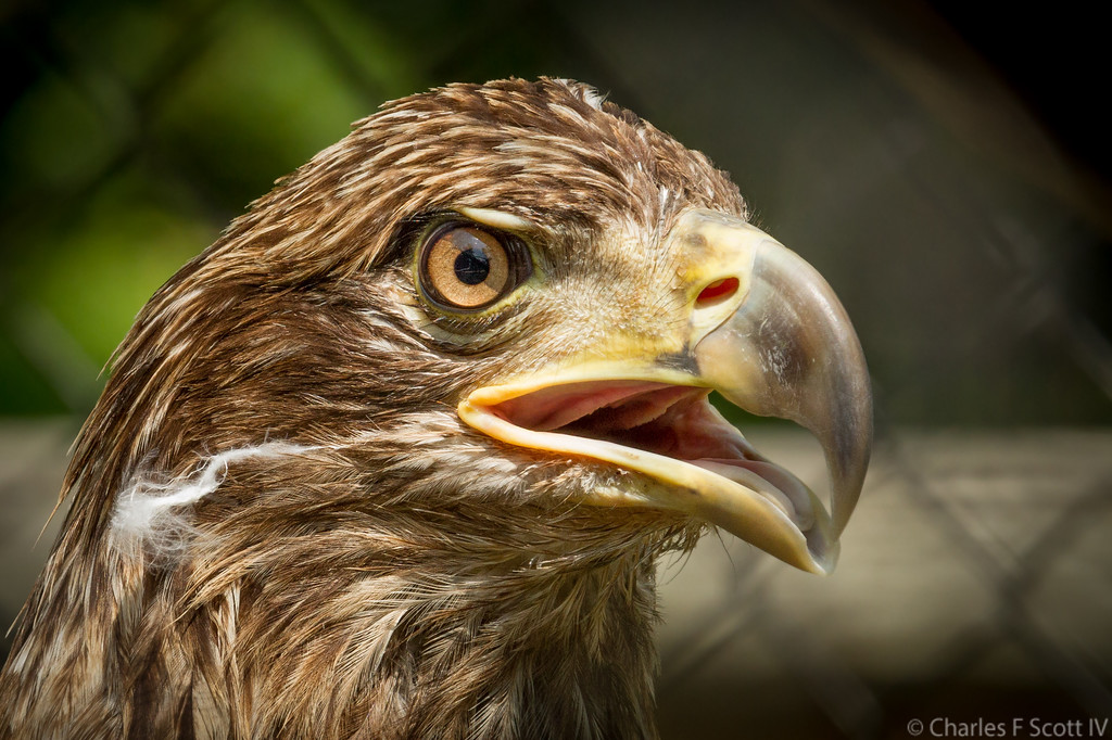 IMAGE: http://www.cscott4.com/Nature/2011-Kentucky/i-xwnfXSR/0/XL/201107282736-XL.jpg
