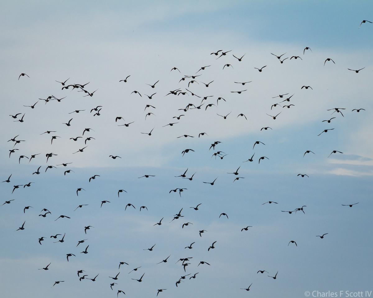 IMAGE: https://photos.smugmug.com/Public/2011-Wildlife/i-Qvb6P3N/0/34f90916/X2/20111109-5277-X2.jpg
