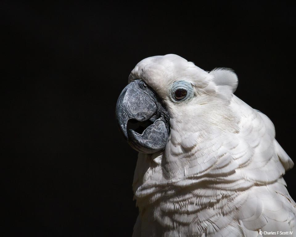 IMAGE: http://www.cscott4.com/Zoos/2012-Caldwell-Zoo-Tyler-Texas/i-ZCtDgL4/2/XL/20121020-3350-XL.jpg