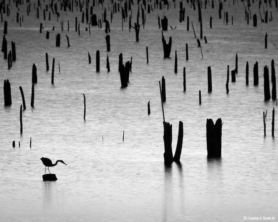 IMAGE: https://photos.smugmug.com/Public/2012-Landscape/i-Hnkpjkg/0/f28106c0/XL/20121114-4426-BW-XL.jpg