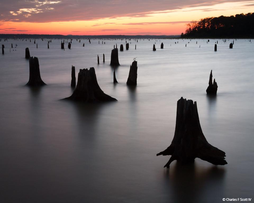 IMAGE: http://www.cscott4.com/Nature/2012-Lake-O-the-Pines-Texas/i-nPgntDD/0/XL/20120831-9947-XL.jpg