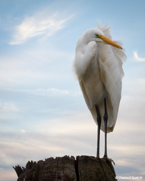 IMAGE: http://www.cscott4.com/Nature/2012-Caddo-Lake-State-Park/i-HzNqWNn/0/XL/20121115-4772-3-XL.jpg