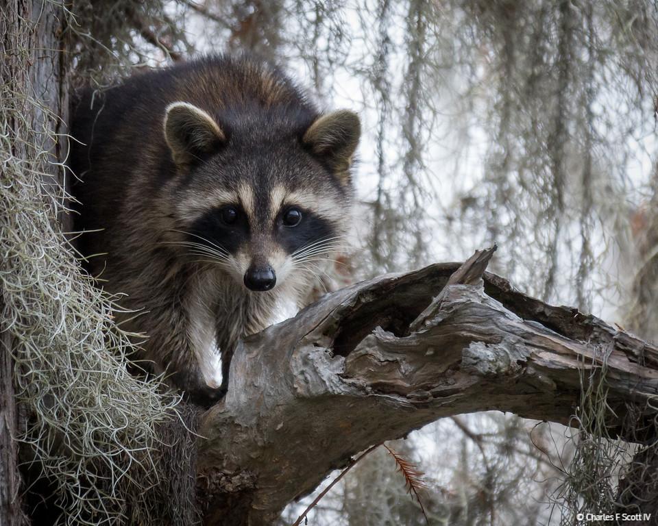 IMAGE: http://www.cscott4.com/Animals/2012-Wildlife/i-ztd5k2n/1/XL/20121115-4555-XL.jpg