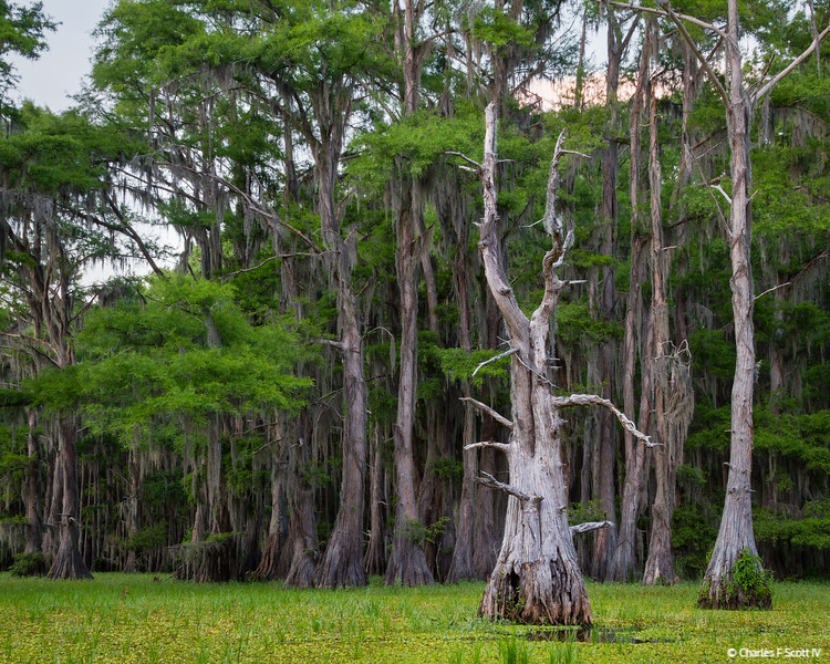 Pronghorn Tree