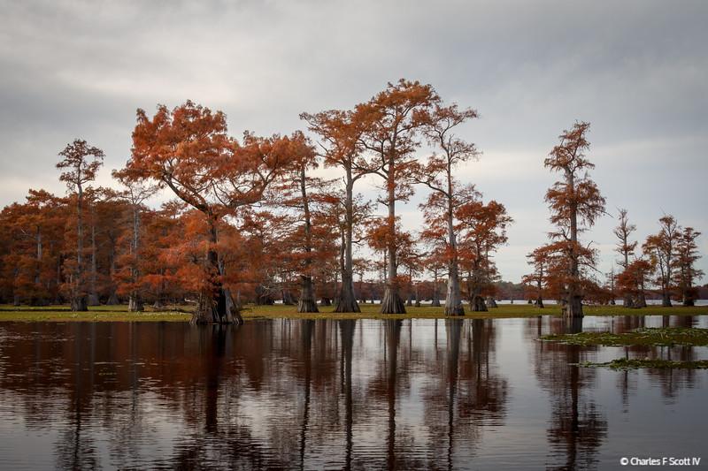 Caddo Lake in Fall