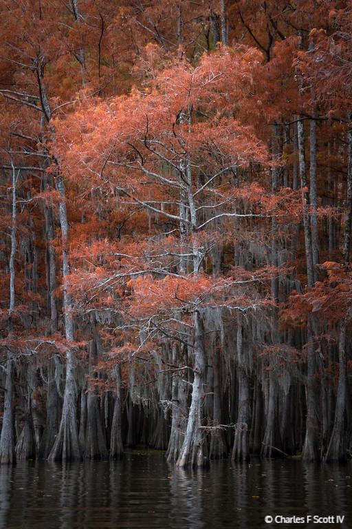 IMAGE: http://www.cscott4.com/Landscapes/2013-Landscape/i-SLVgqBn/0/XL/20131120-3640-XL.jpg