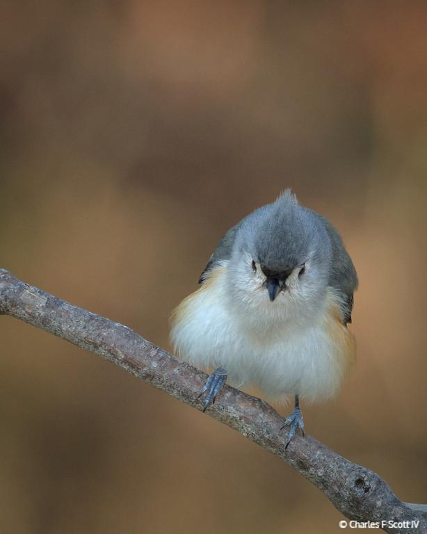 IMAGE: http://www.cscott4.com/Animals/2013-Wildlife/i-Tb9sSTX/0/XL/20131224-4249-XL.jpg