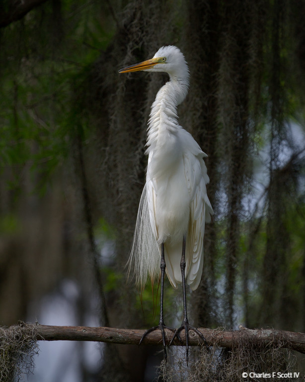 IMAGE: http://www.cscott4.com/Animals/2013-Wildlife/i-njWh4NX/0/XL/20130605-0060-XL.jpg
