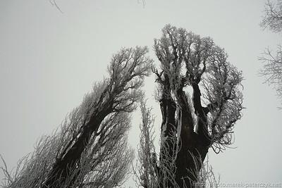 Fraktalne topole / Fractal poplar
