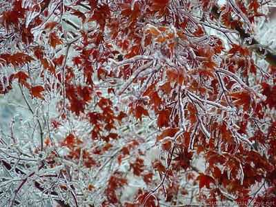 Zamarznięta jesień / Frozen Fall