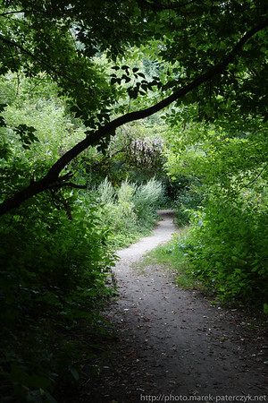 Leśna ścieżka / Forest path