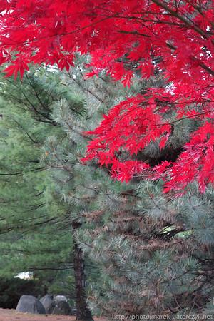 Jesień / Fall