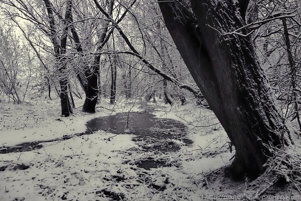 Leśne lodowisko / Forest rink