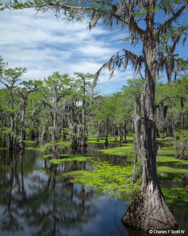 QUOTED IMAGE