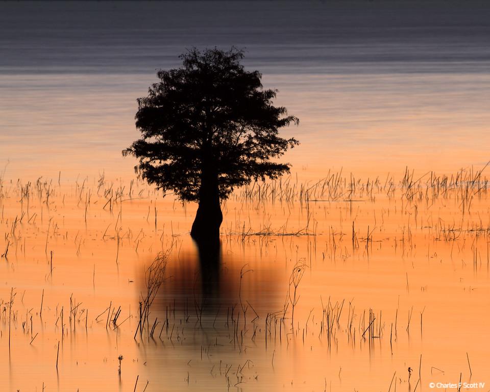IMAGE: http://www.cscott4.com/Public/2014-Landscape/i-cpbFjFP/0/XL/20141111-9173-XL.jpg