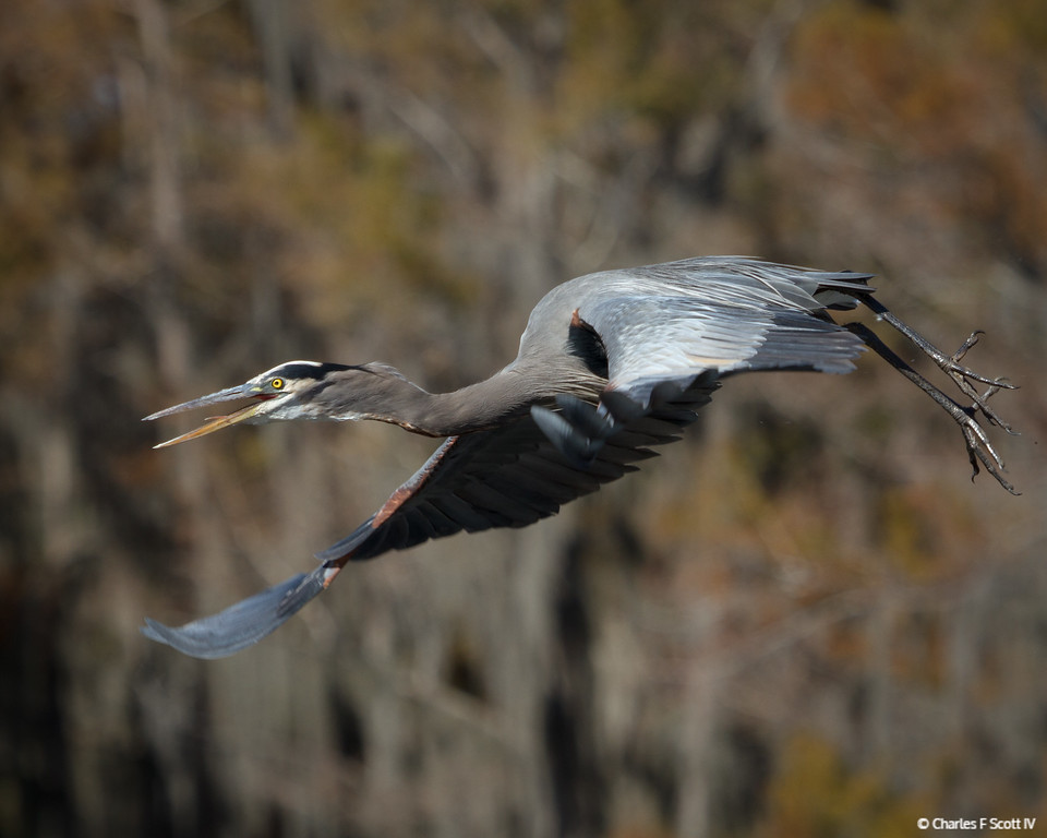 IMAGE: http://www.cscott4.com/Public/2014-Wildlife/i-837nQDb/0/XL/20141109-8811-XL.jpg