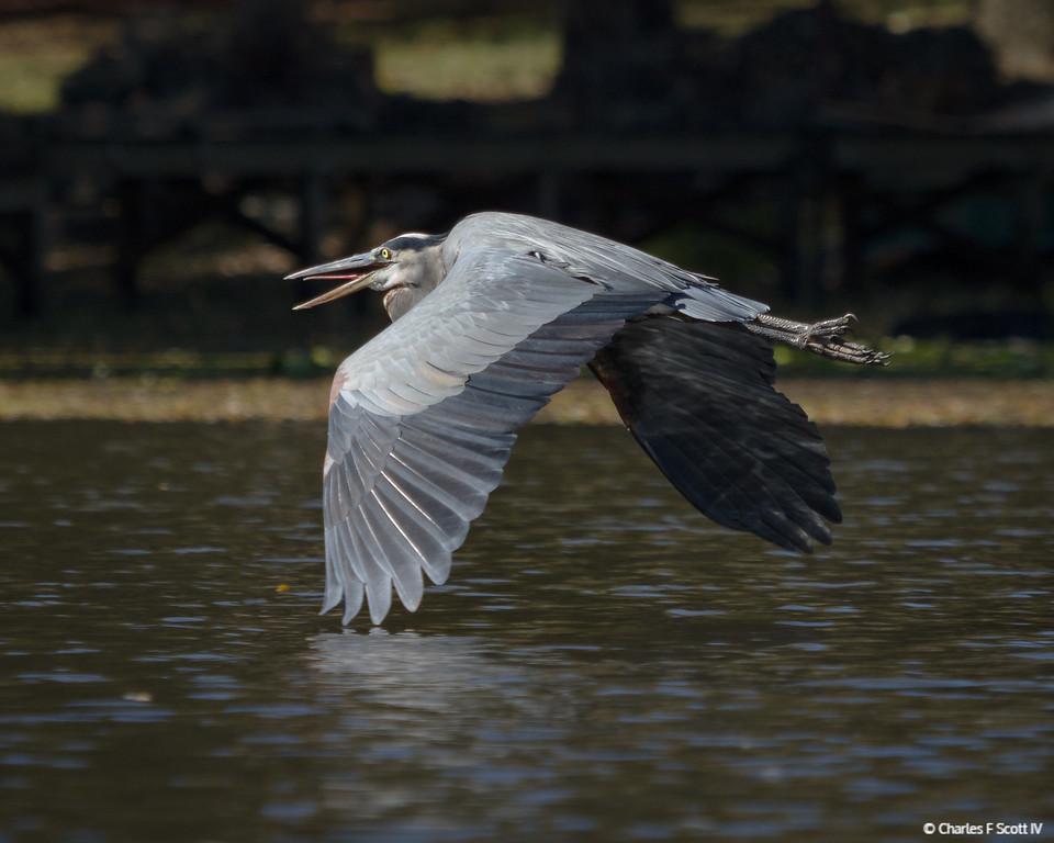IMAGE: http://www.cscott4.com/Public/2014-Wildlife/i-GbpczXr/0/XL/20141109-8819-XL.jpg