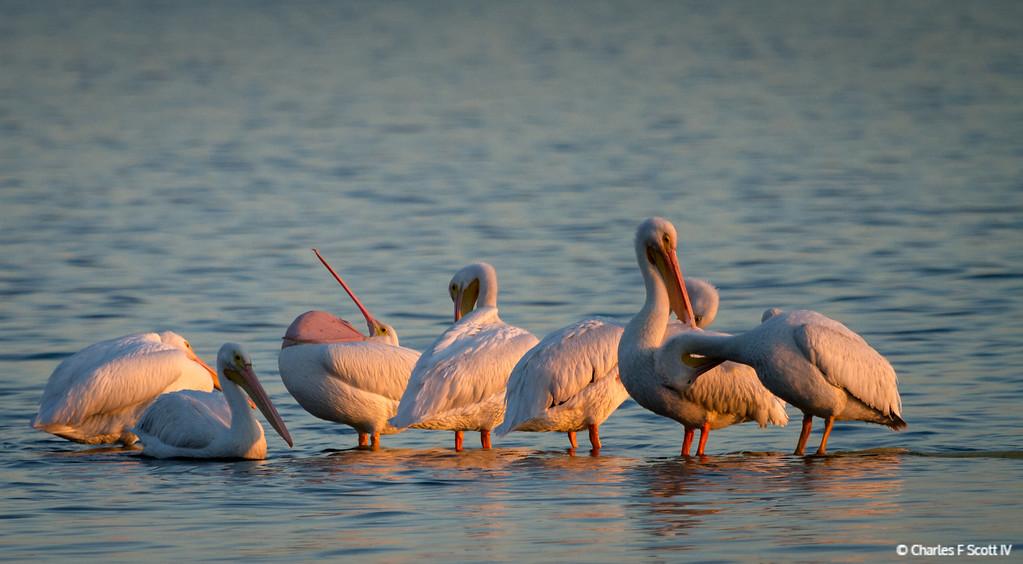 IMAGE: http://www.cscott4.com/Public/2014-Wildlife/i-xVFvVGX/0/XL/20141119-0051-XL.jpg