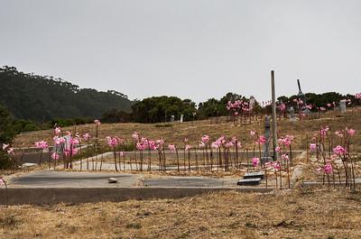 Graveyard (2008)