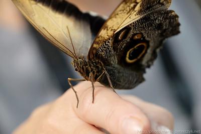 Portret Motyla
