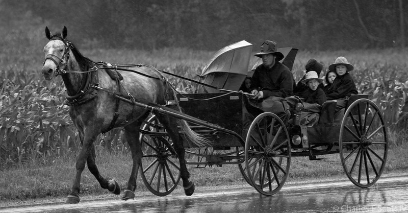 Amish buggy in the rain