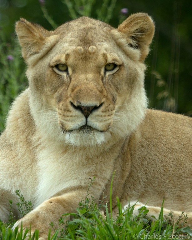 IMAGE: http://www.cscott4.com/Public/2015-Zoo/i-WhzNXxG/0/XL/20150626-0002-XL.jpg