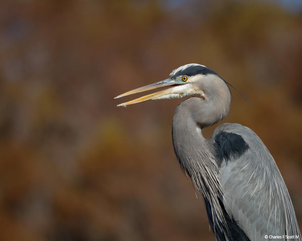 IMAGE: https://photos.smugmug.com/Public/2016-Wildlife/i-vZsn9p4/0/X2/20161201-4640-X2.jpg