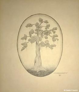 Grandmother's Tree