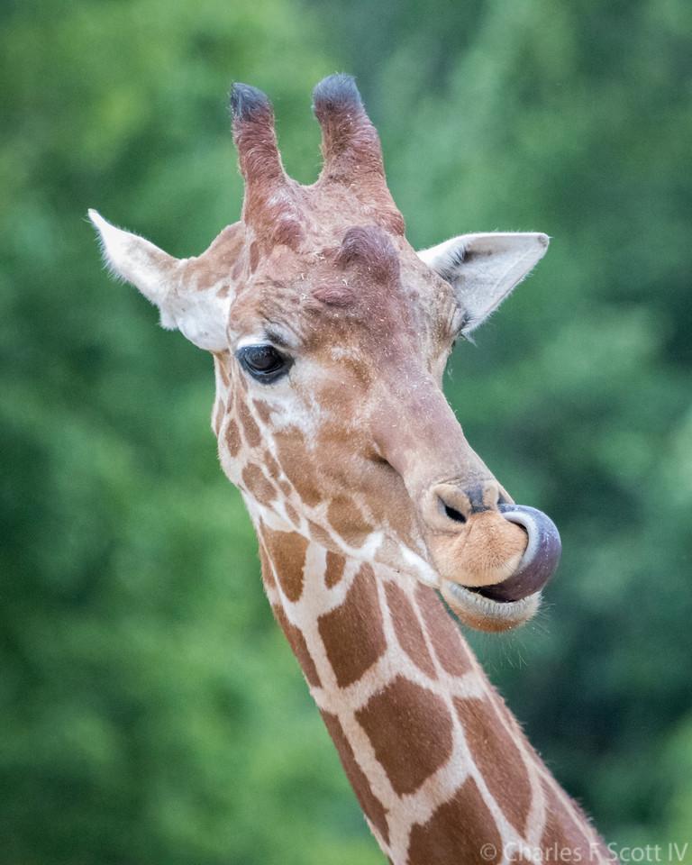 IMAGE: https://photos.smugmug.com/Public/2017-Zoo/i-GmB4Wdj/0/aafbfad3/X2/20170703-0255-X2.jpg