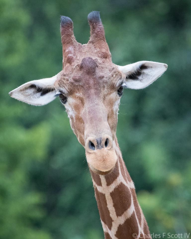 IMAGE: https://photos.smugmug.com/Public/2017-Zoo/i-wpkBJQ5/0/21a3bfad/X2/20170703-0260-X2.jpg