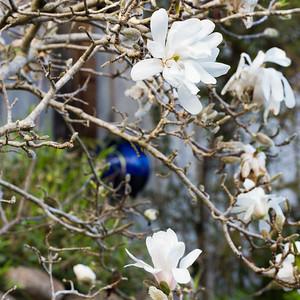 Magnolia Mop