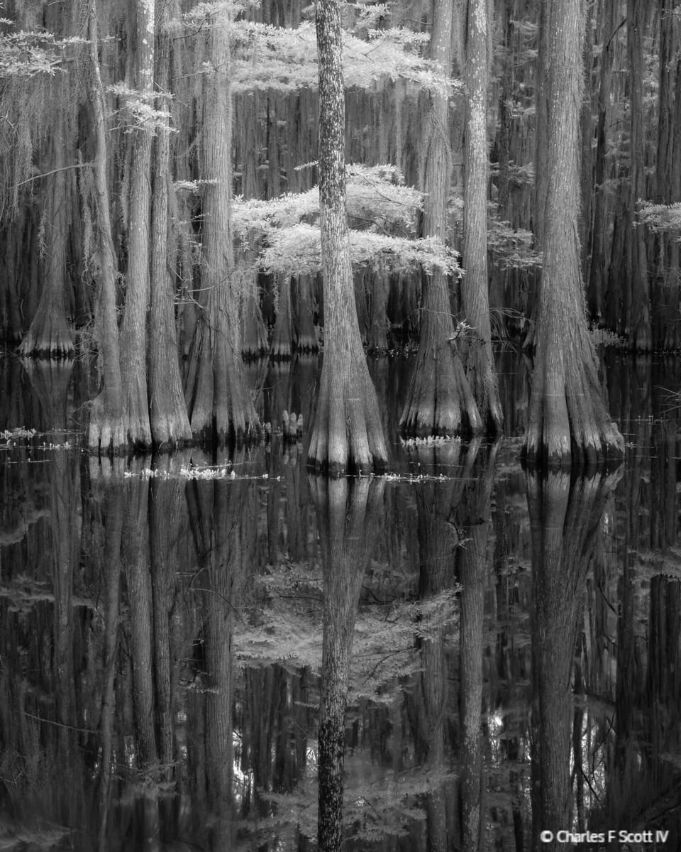 IMAGE: https://photos.smugmug.com/Public/2018-Landscape/i-CKZsnBw/0/611b8e77/X3/20180505-7837-BW-X3.jpg
