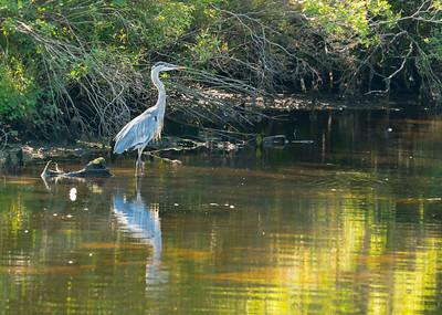 Connetquot River Park